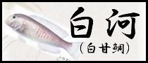 白河(白甘鯛)